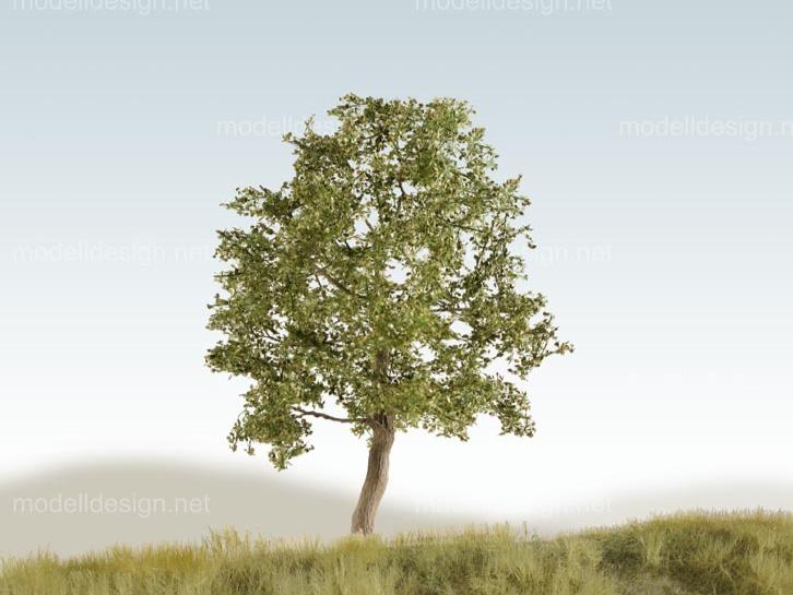 sind obstbäume laubbäume