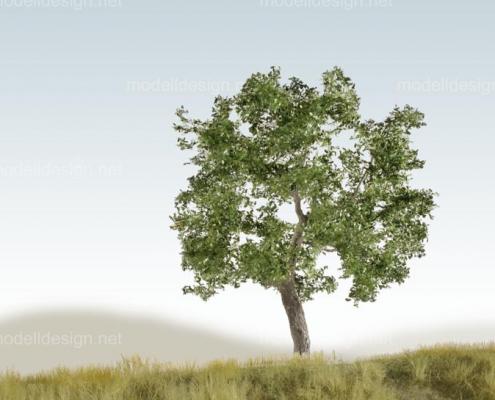 Modellbaum breit Eiche sommer