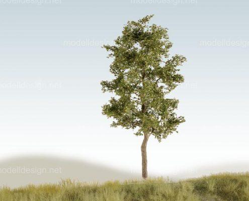 Modellbaum schmal Erle sommer