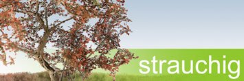 Laubbäume strauchig